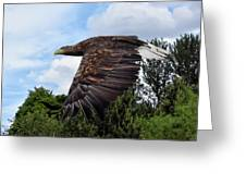 White Tailed Eagle Greeting Card