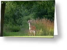 White Tailed Greeting Card