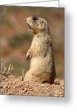 White-tailed Prairie Dog Giving A Fierce Bark Greeting Card