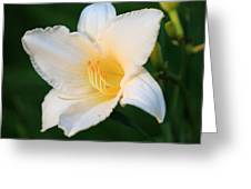 White Temptation Lily Greeting Card