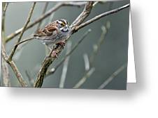 White Throated A Sparrow Greeting Card
