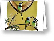 White Throated Bee Eater Pf Greeting Card