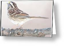 White-throated Sparrow Looking Skyward Greeting Card