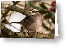 White Throated Sparrow On Branch New Jersey Greeting Card