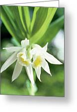 White Thunia Greeting Card
