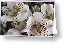 White Tiger Azalea Greeting Card