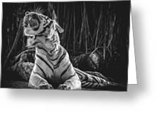White Tiger. Growl. Greeting Card