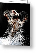 White Tiger Jumping In Water Greeting Card