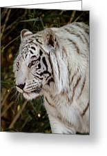 White Tiger Portrait 2 Greeting Card