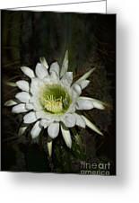 White Torch Cactus  Greeting Card