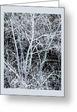 White Tree Black Night Greeting Card