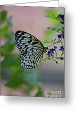 White Tree Nymph Polinating Purple Flowers Greeting Card