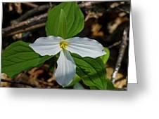 White Trillium 2 Greeting Card