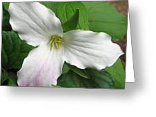 White Trillium Greeting Card