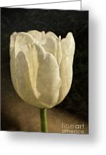 White Tulip With Texture Greeting Card