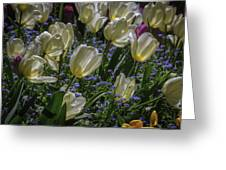 White Tulips In The Garden Greeting Card