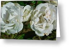 White Twin Flowers Greeting Card