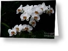 White Velvet Greeting Card
