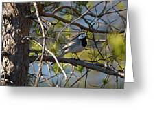 White Wagtail 2 Greeting Card
