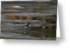 White Wagtail 4 Greeting Card