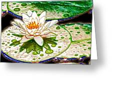 White Water Lilies Flower Greeting Card