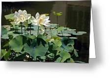 White Waterlilies Greeting Card