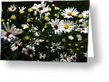 White Wild Aster Greeting Card