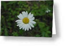 White Wild Flower  Greeting Card
