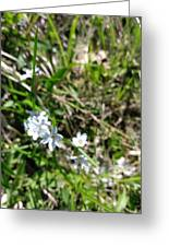 White Wild Flower Greeting Card