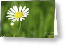 White Wild Flower Spring Scene Greeting Card
