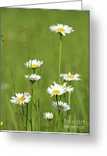White Wild Flowers Nature Spring Scene Greeting Card