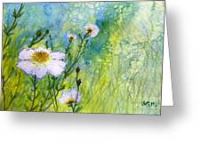 White Wild Poppies Greeting Card