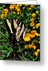 White Wing Butterfly Greeting Card