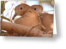 White-winged Doves In Lovebird Pose Greeting Card