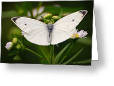 White Wings Of Wonder Greeting Card