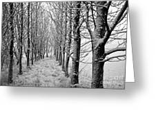 White Winter Pathway Greeting Card
