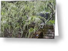 White Wisteria, Sissinghurst Greeting Card