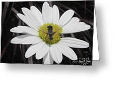 White With Bee Greeting Card