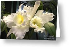 White With Yellow Orchids  Greeting Card