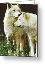White Wolf Pair Greeting Card