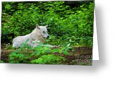 White Wolfe Greeting Card