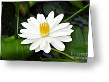 White Wonder Greeting Card
