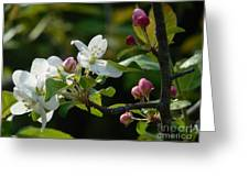 White Woodland Crabapple Flowers Greeting Card