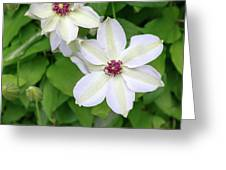 White, Yellow, And Purple Clematis Blossom Greeting Card