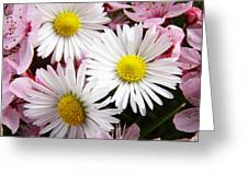 White Yellow Daisy Flowers Art Prints Pink Blossoms Greeting Card
