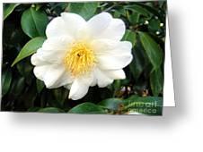 White-yellow Flower. Little Sun Greeting Card