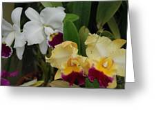 White Yellow Orchids Greeting Card