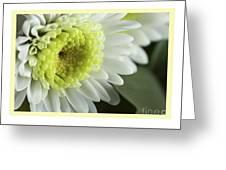 White Mum Card Greeting Card