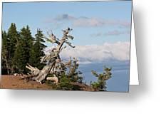 Whitebark Pine At Crater Lake's Rim - Oregon Greeting Card