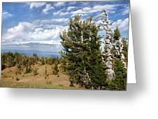 Whitebark Pine Trees Overlooking Crater Lake - Oregon Greeting Card